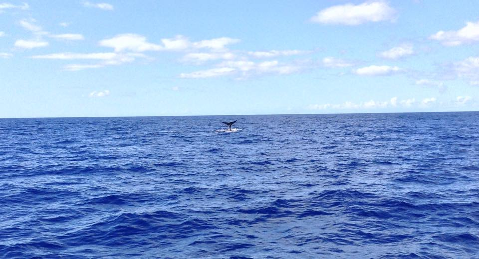 Dominica whale tail