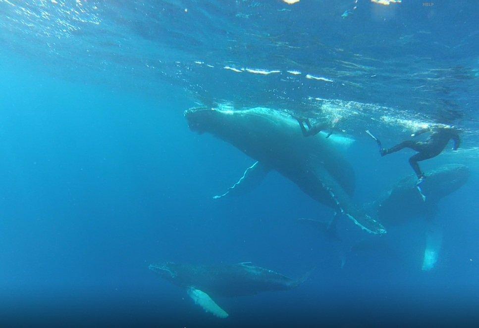 Soccoro Whales