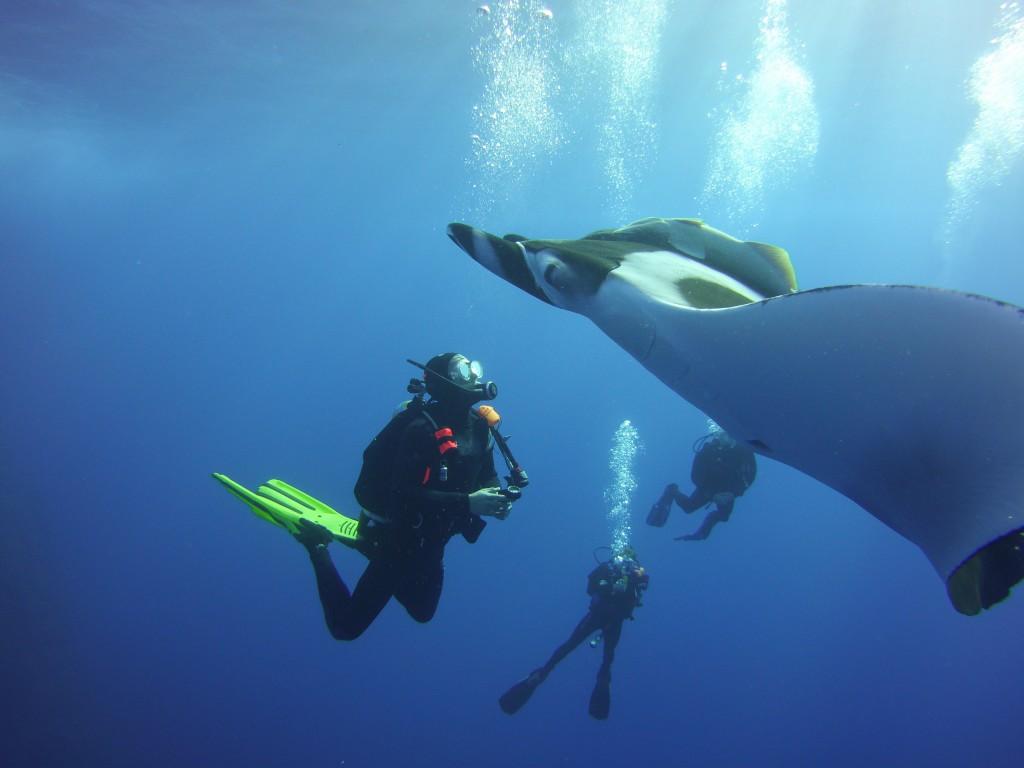 Socorro 35 giant manta