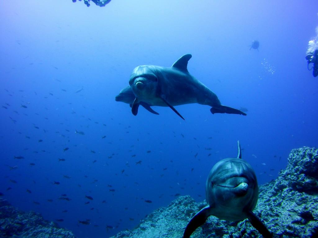 Socorro 38 dolphin
