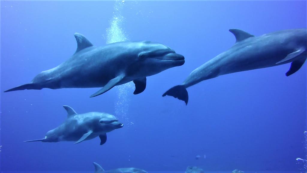 Socorro 39 dolphin