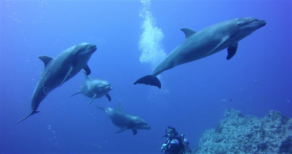 Socorro 40 dolphin