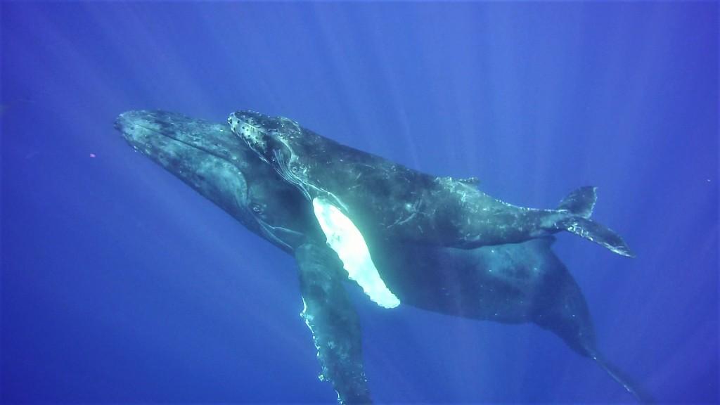 Socorro 44 humpback