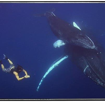 Socorro whales